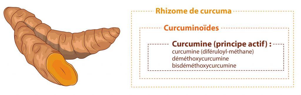 Curcuma curcuminoides et curcumine Nutrixeal Info