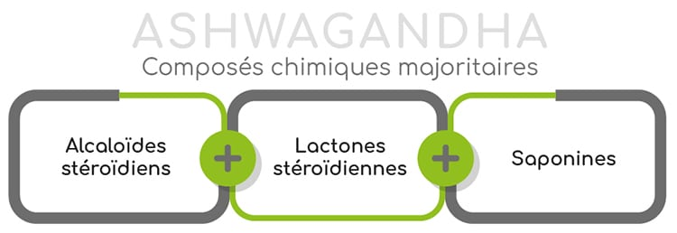 Ashagandha composition chimique majoritaire
