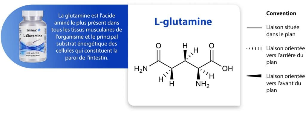 glutamine_représentation_Nutrixeal-Info