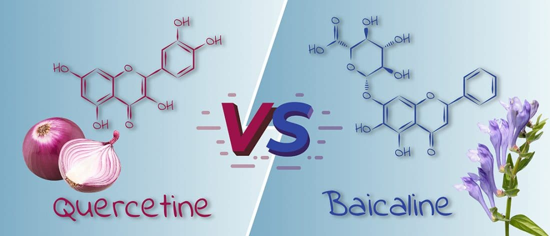 visuel-article_quercetine-VS-scutellaria_Nutrixeal-Info