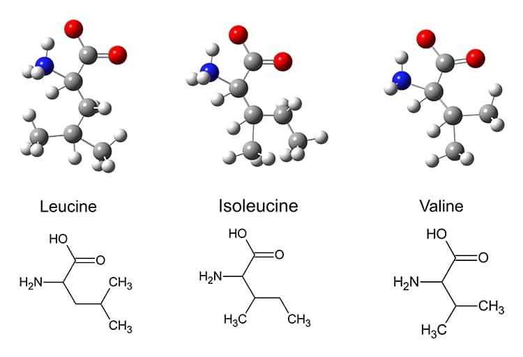 BCAA : structure moléculaire de la leucine, isoleucine et valine.