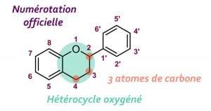 Squelette de base des flavonoïdes Nutrixeal Info