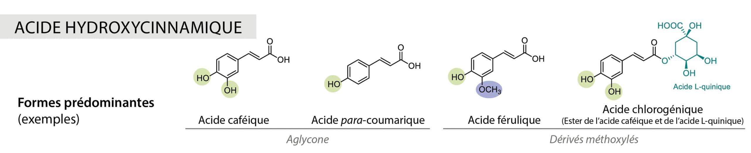 acide hydroxycinnamique Nutrixeal Info