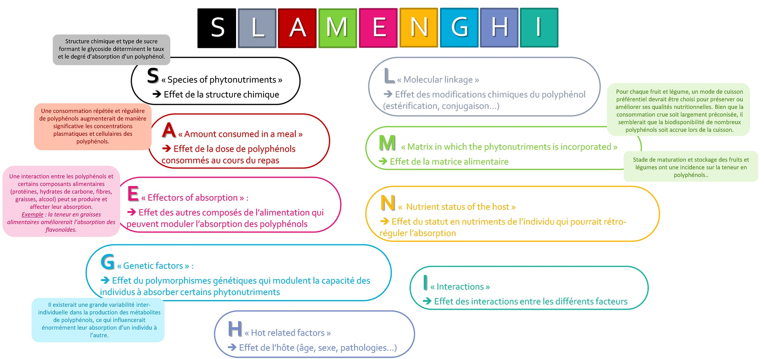 mnémotechnique SLAMENGHI pour le biodisponibilité des polyphénols, sur Nutrixeal Info