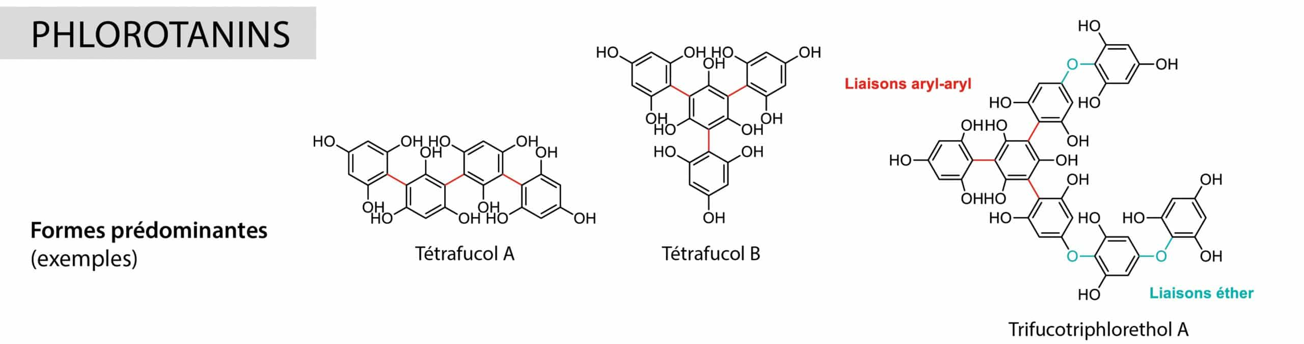 phlorotanins Nutrixeal Info