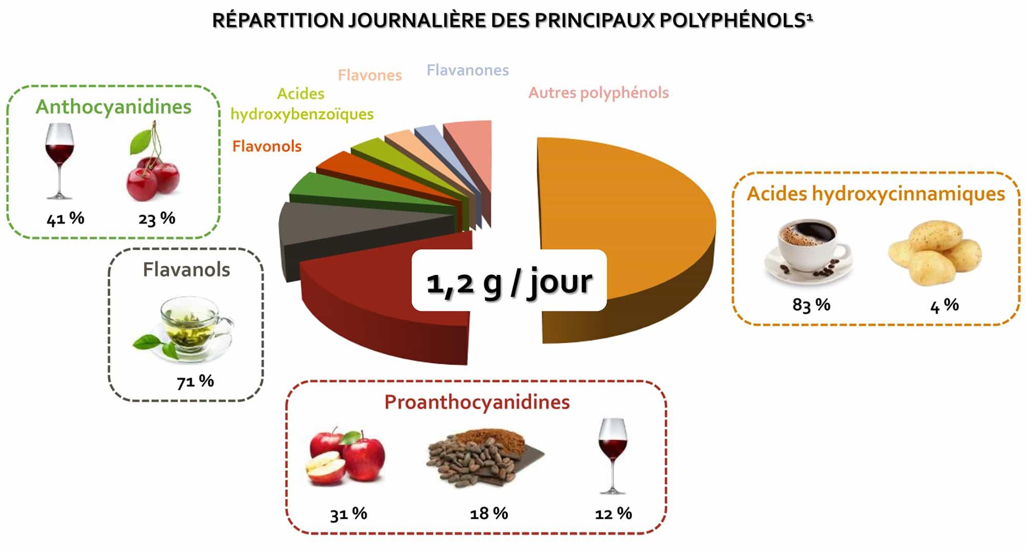 Répartition Journalière des principaux polyphénols, sur Nutrixeal Info