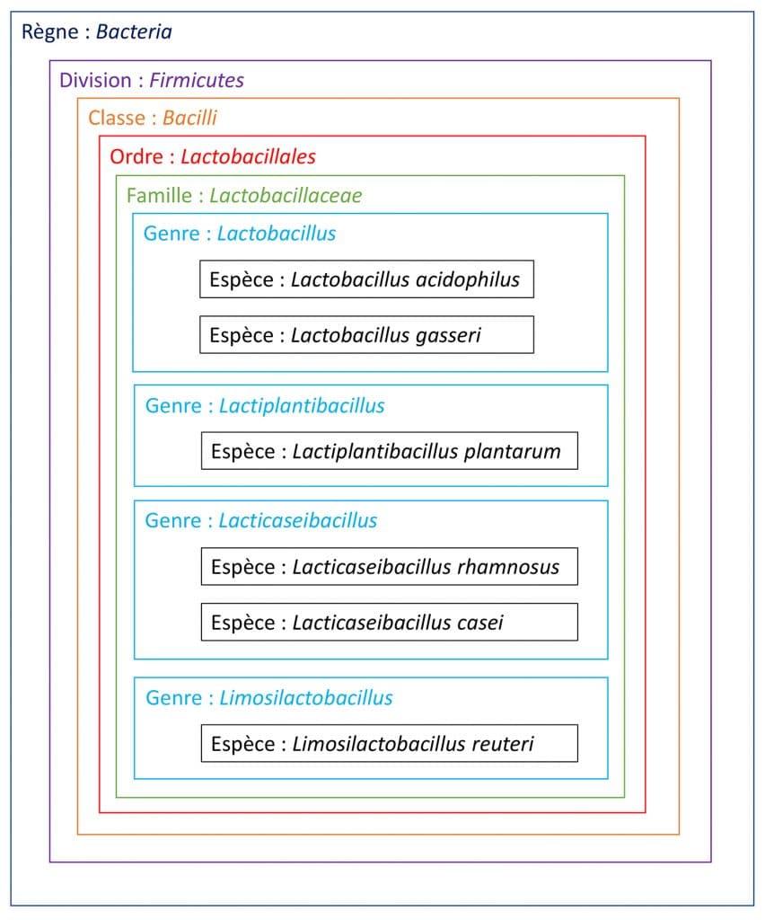 Nouvelle classification des lactobacilles Nutrixeal Info