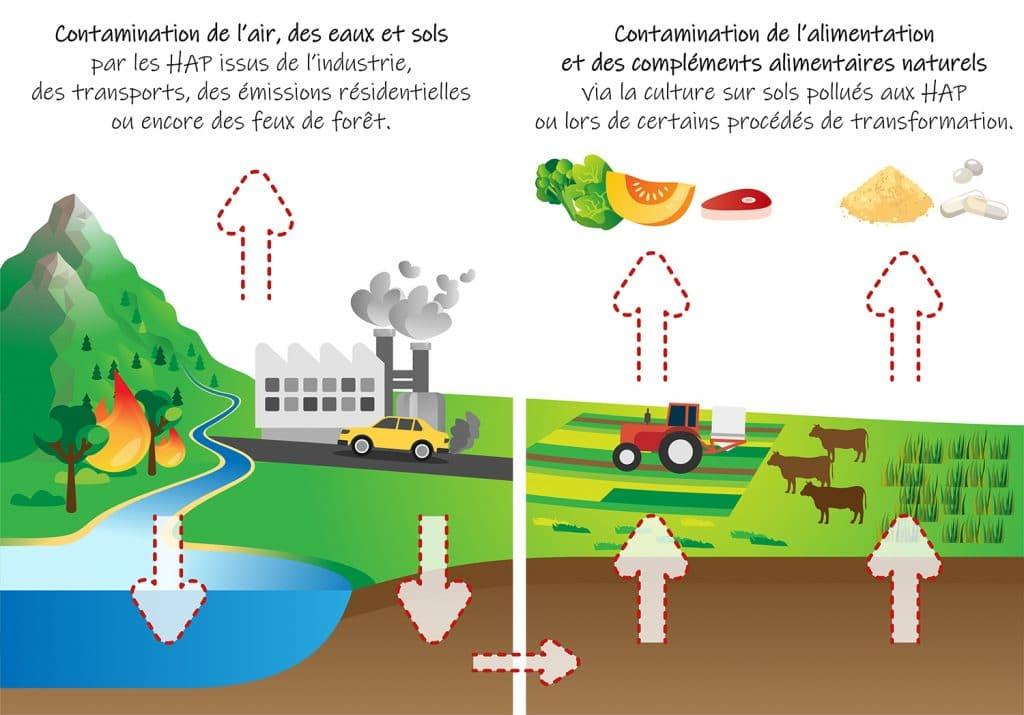 Sources de HAP dans les compléments alimentaires, l'alimentation et l'environnement.