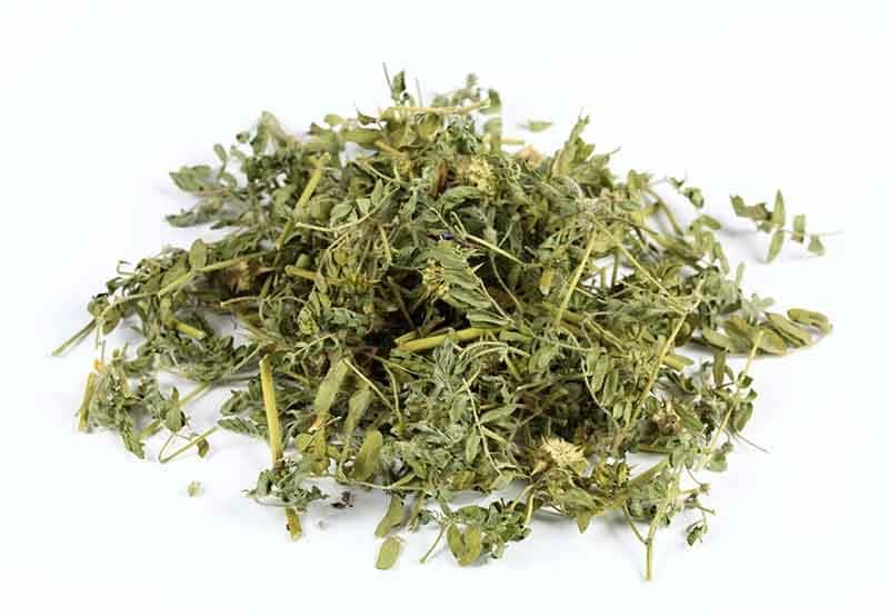 Tribulus terrestris plante séchée nutraceutique nutrixeal