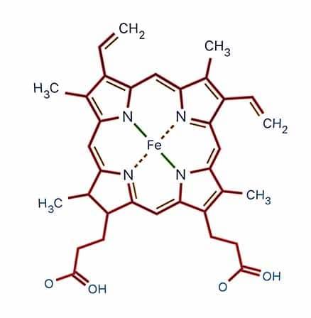 Heme et chlorophylline : parenté structurelle