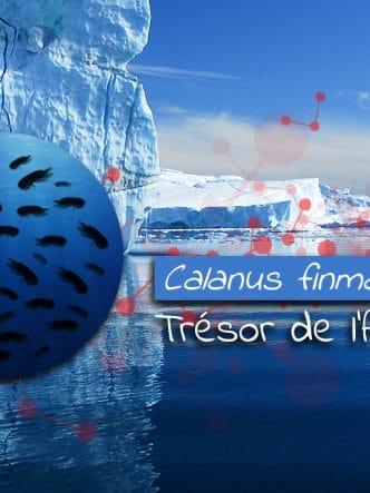 Calanus finmarchicus, trésor de l'Arctique.