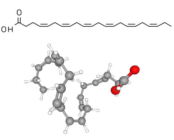 Structure moléculaire du DHA (acide docosahexaénoïque)