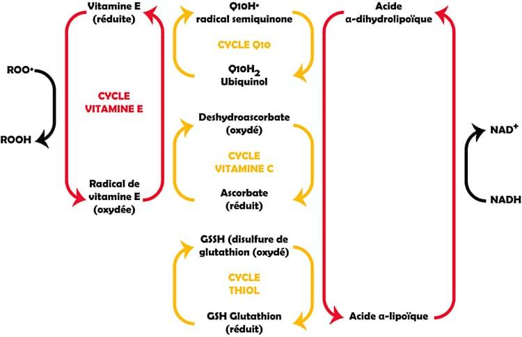 Recyclage des antioxydants