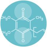 L'ubiquinone, forme oxydée de la coenzyme Q10, n'est pas bio active.
