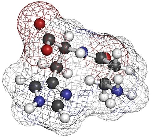 Structure 3D de la L-carnosine.