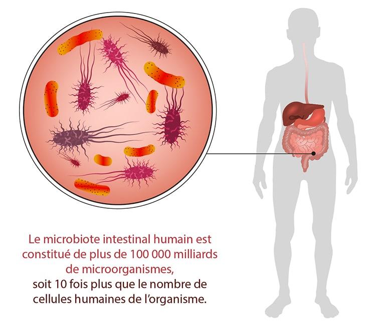 Microbiote intestinal