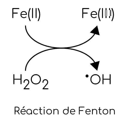 Exces de fer _ reaction de Fenton.