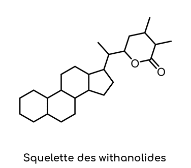 squelette withanolides ashwagandha Nutrixeal Info