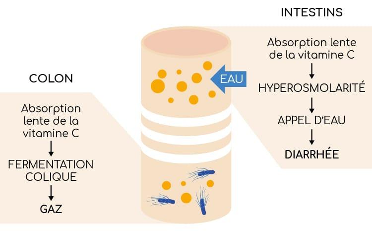 Vitamine C et troubles osmotiques intestinaux
