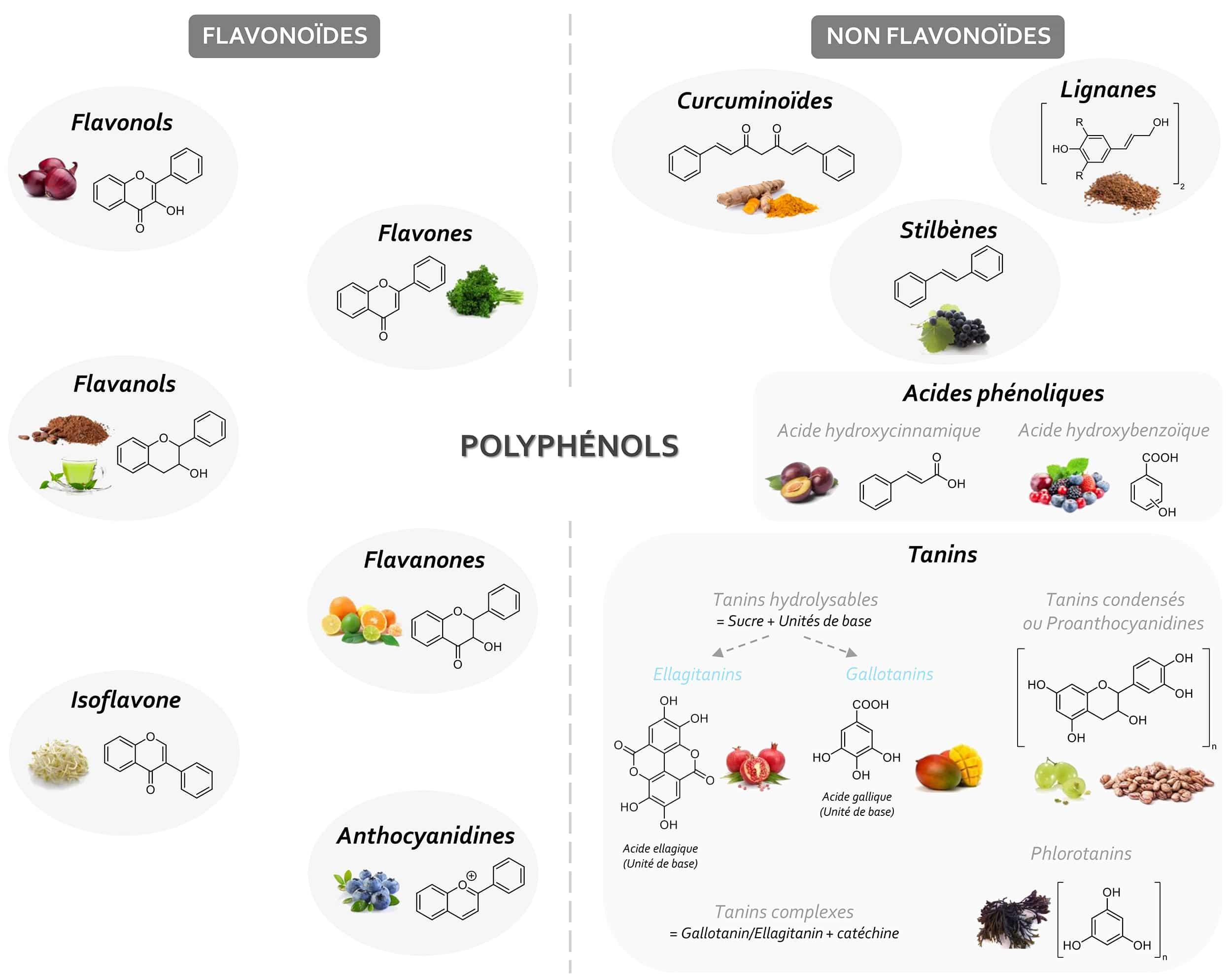 Classification des différentes sous-classes de polyphénols Nutrixeal Info