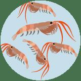 huile de krill : riche en omega-3