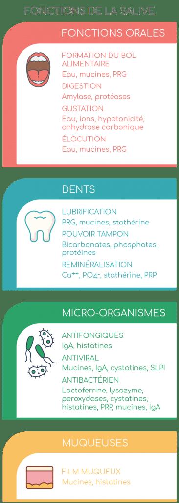 fonctions de la salive nutriixeal info