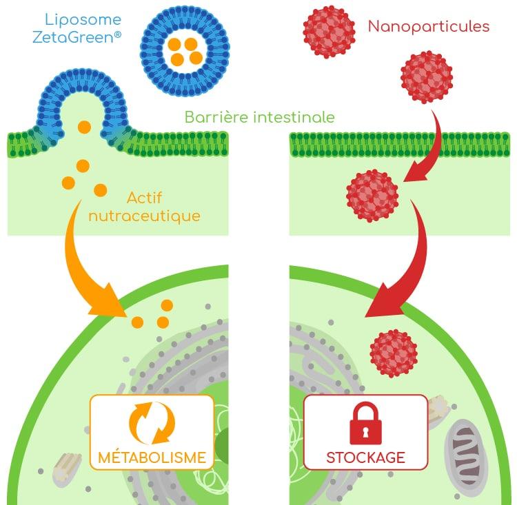 liposomes et nanoparticules nutrixeal info