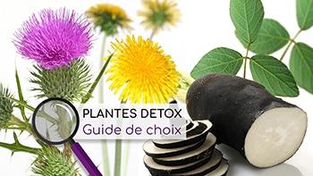 plantes detox guide de choix nutrixeal info