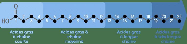 acides gras longueur chaine carbonée nutrixeal info 3