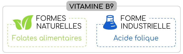 differentes formes de vitamine B9 nutrixeal info-03