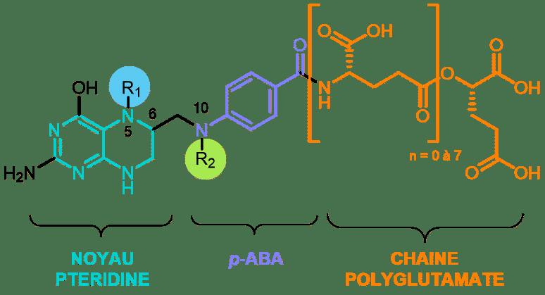 folates acide folique structure chimique de base nutrixeal info 3