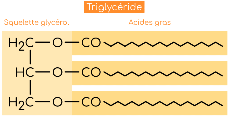 structure triglyceride nutrixeal info v2