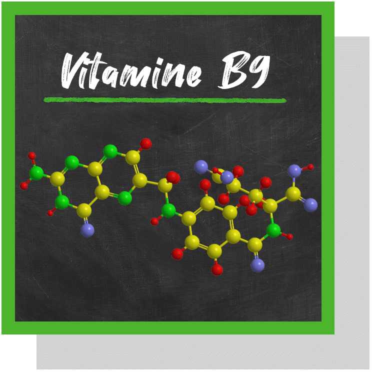 vitamine B9 folate acide folique index nutraceutique nutrixeal info